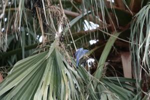 Wer findet den 'Blue Mountain Bird'?