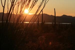 Sonnenuntergang in der Sonoran Desert