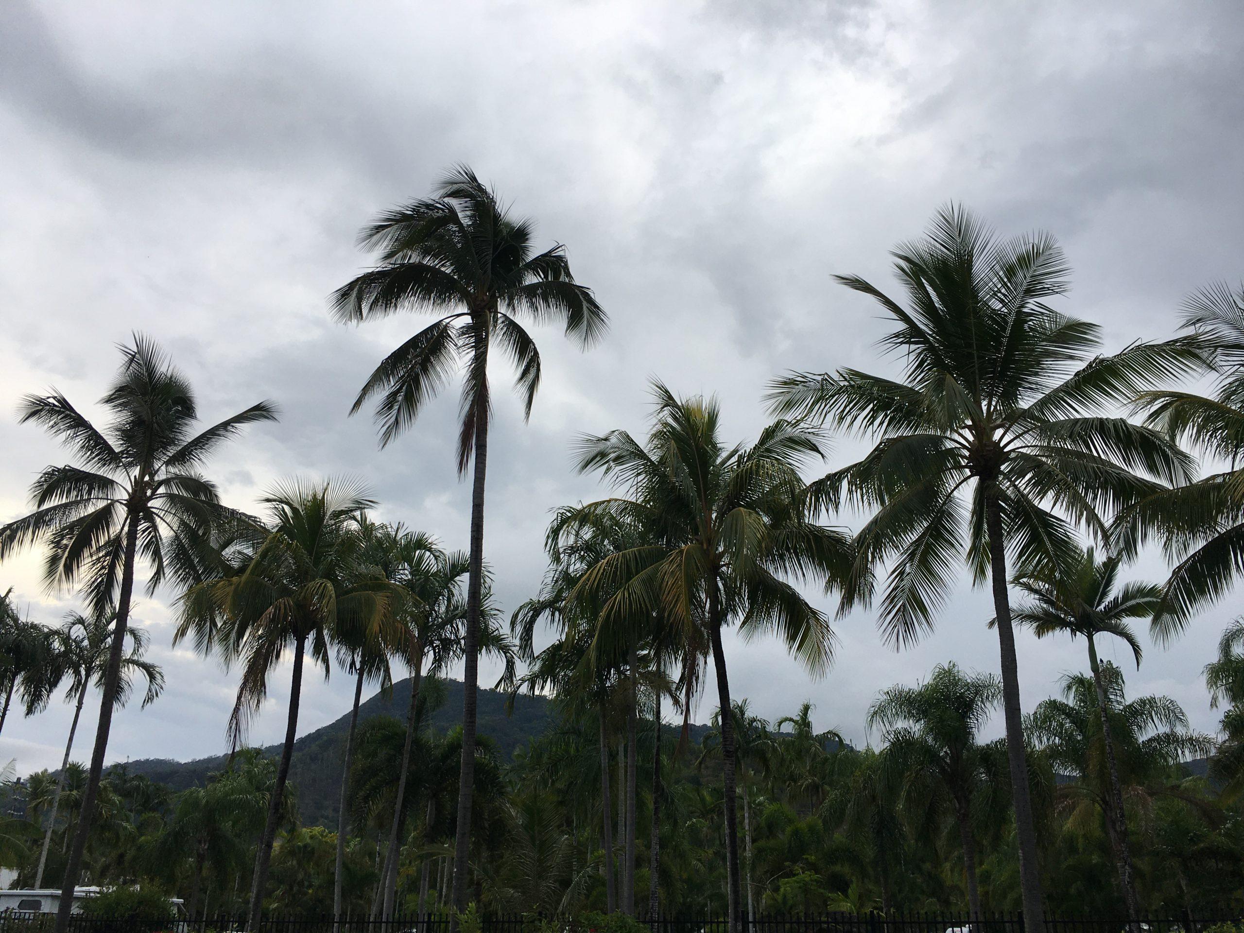 Sonntag 15.Dezember, Ankunft in Cairns