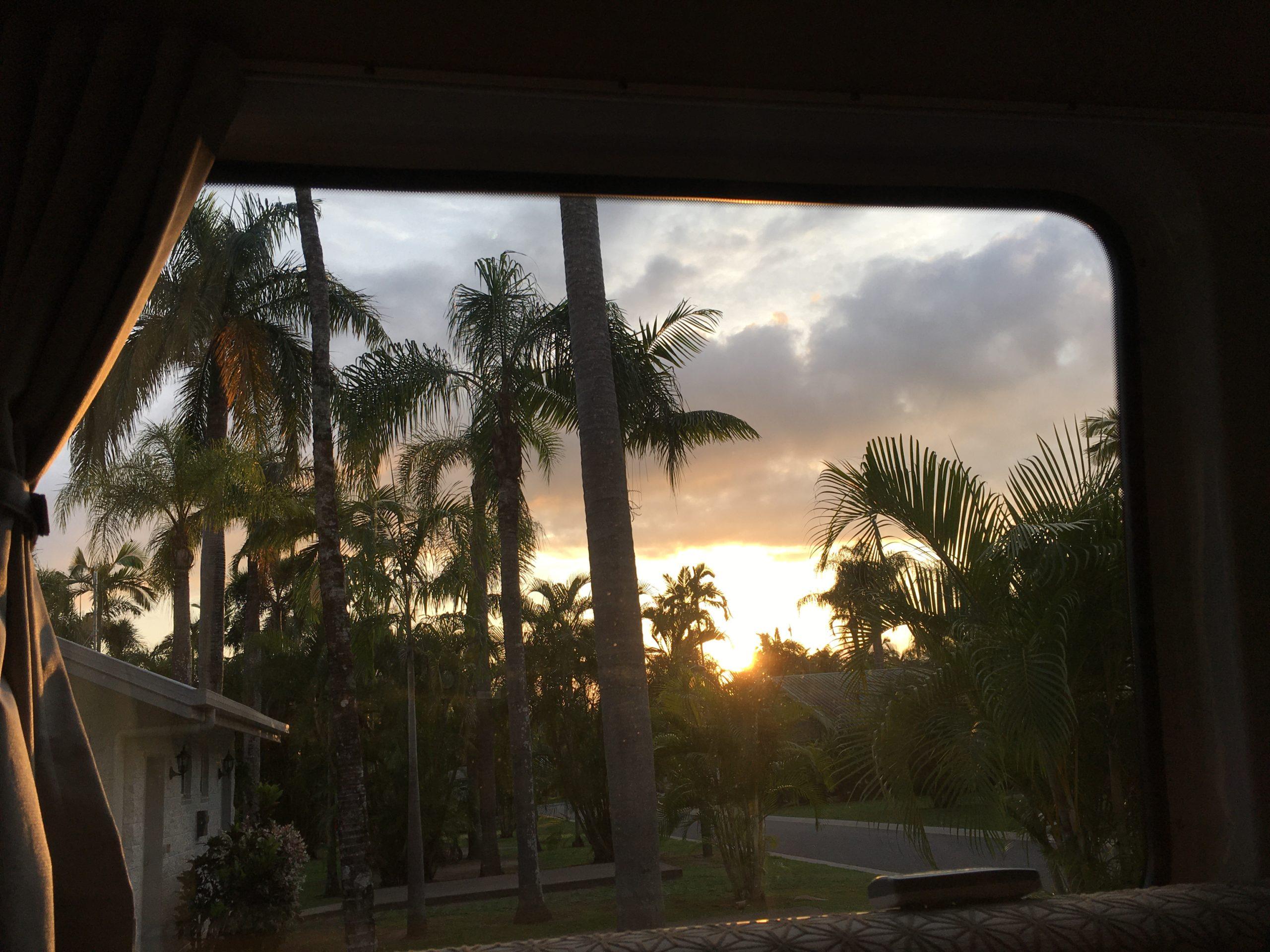 Montag 16. Dezember, Daintree und intellektuelle Tiere in Cairns